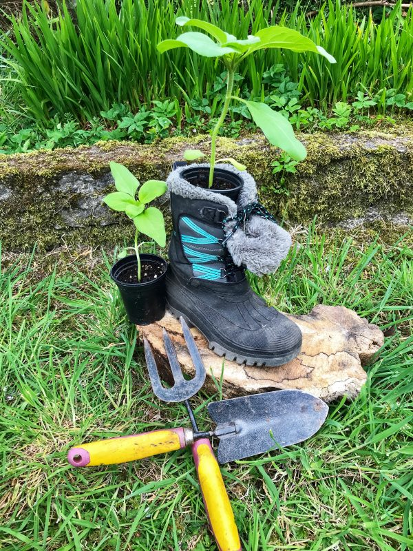 old boot used as a plant pot with gardening tools