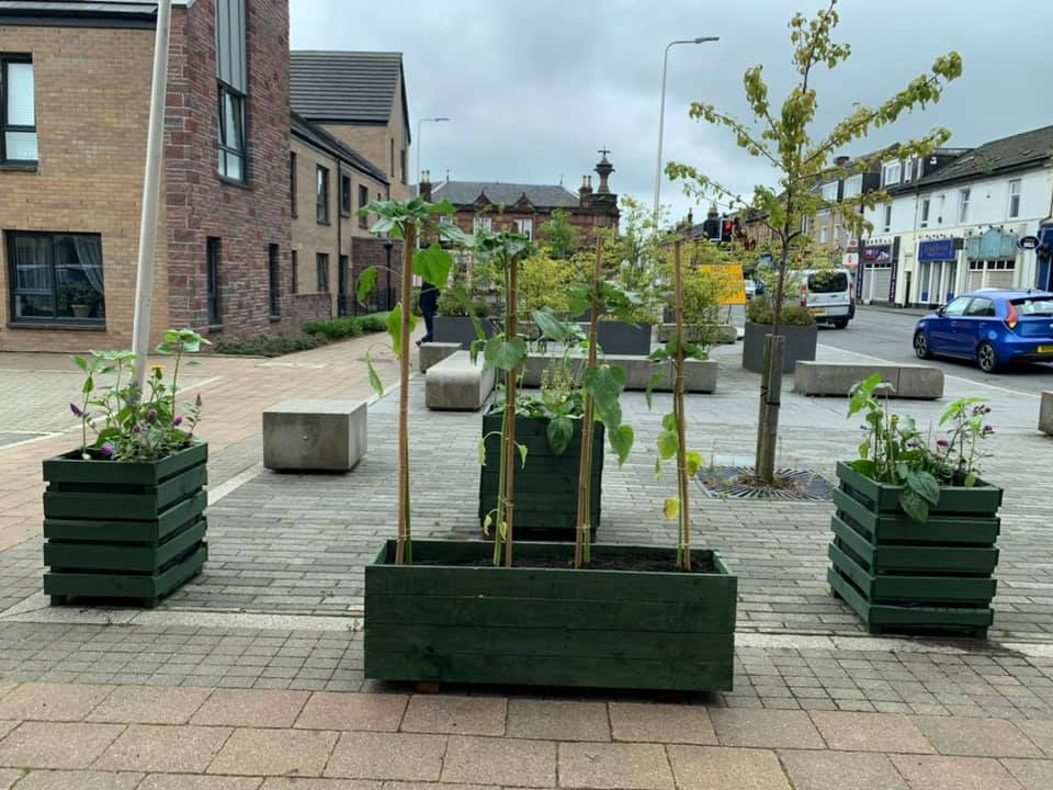 Community orchard growing in Alexandria town centre